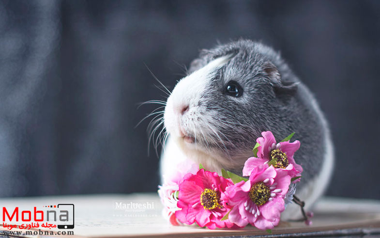 mieps-the-photogenic-piggy-57da555ccfa66__880