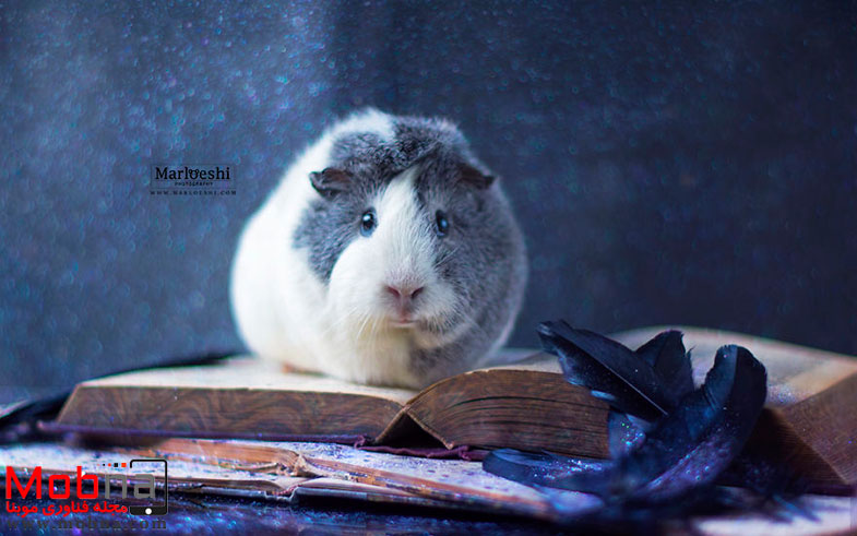 mieps-the-photogenic-piggy-57da5560118e9__880