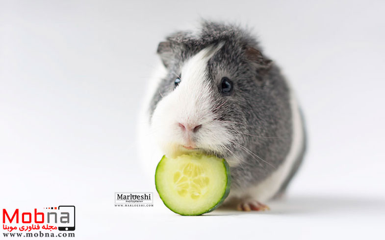 mieps-the-photogenic-piggy-57da556975a4b__880