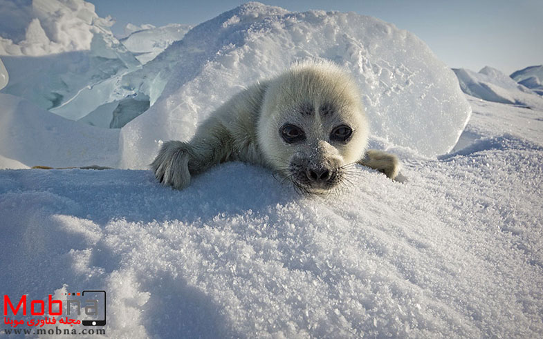 cute-baby-seal-waves-photographer-alexy-trofimov-russia-01a