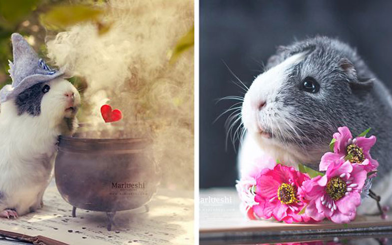 mieps-the-photogenic-piggy-fb__700-png