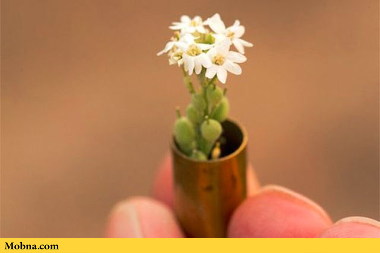 Biodegradable Bullets That Sprout Plants (3)